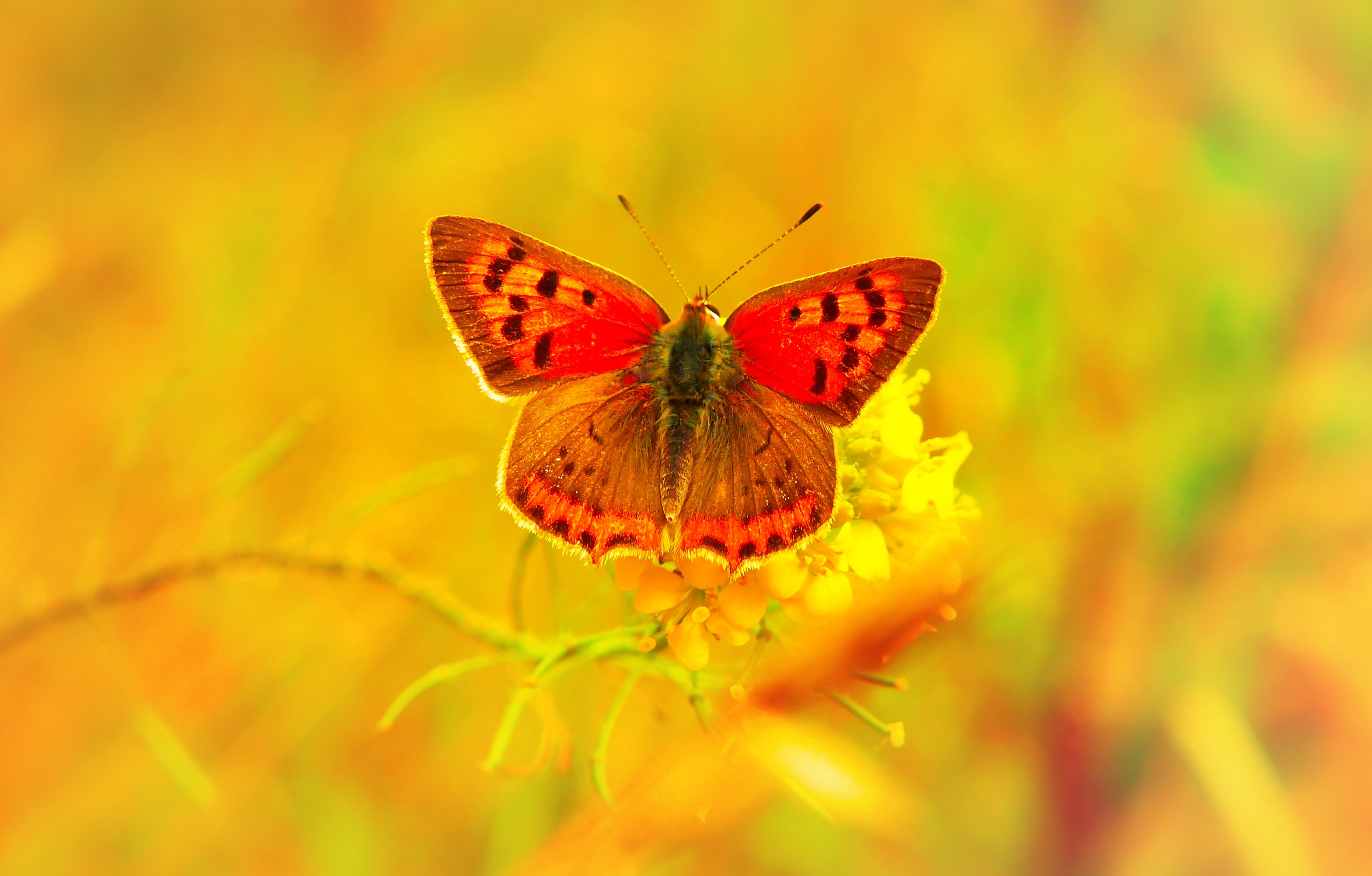 red and black butterfly perched on yellow petaled flower