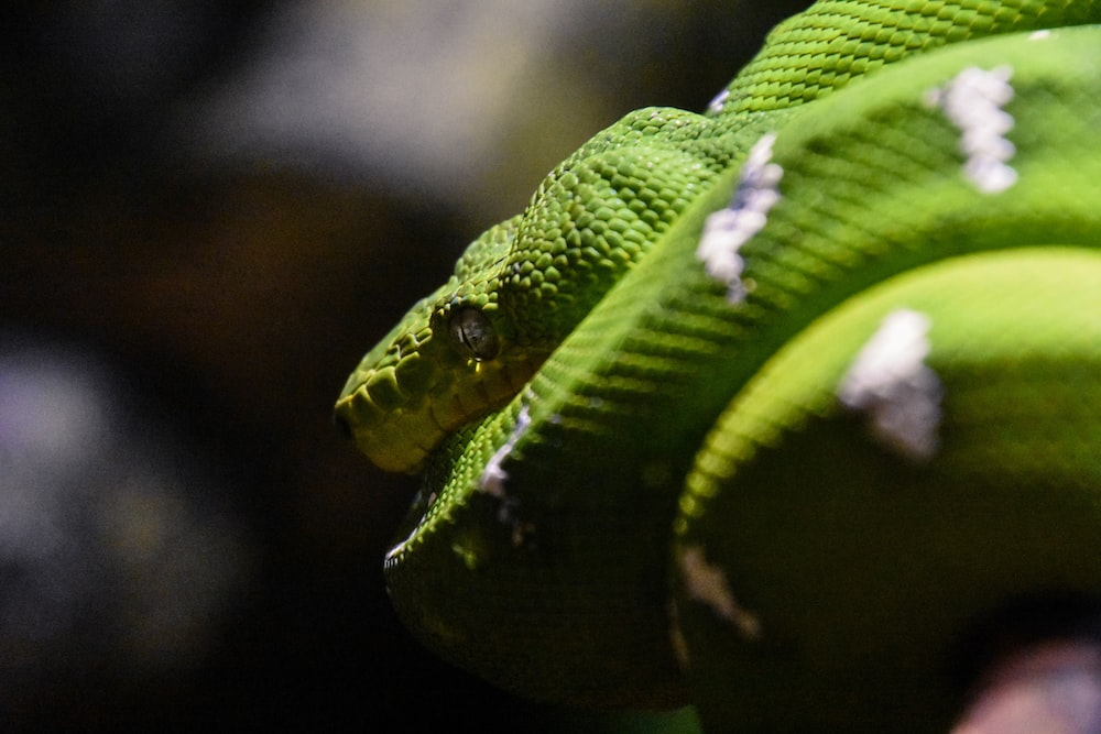 green and white snake selective photography