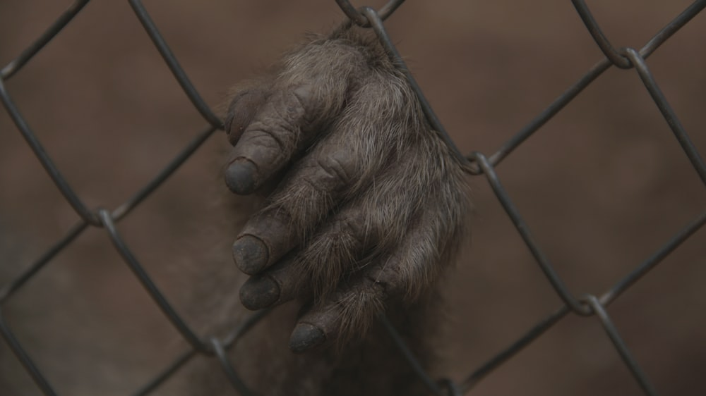 left hand on chain link fence