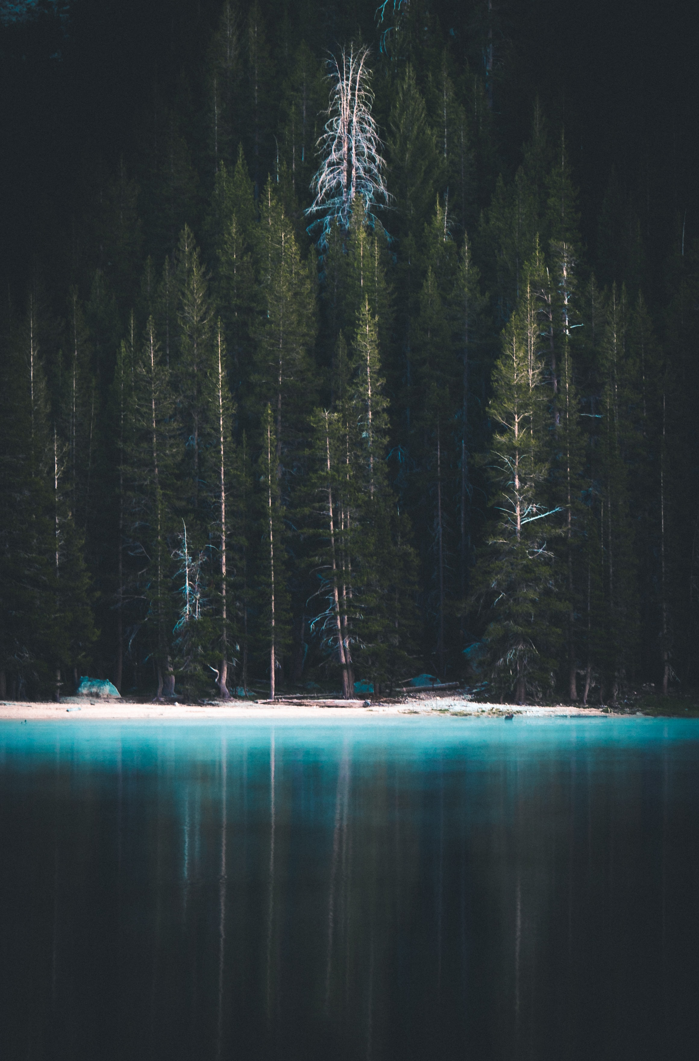 blue sea beside pine trees