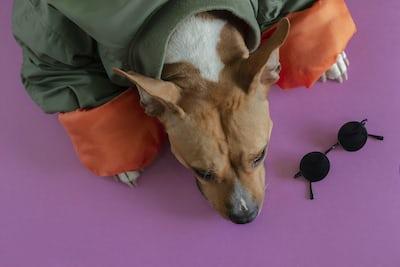 El bienestar del perro es lo primero, lleve o no lleve ropa