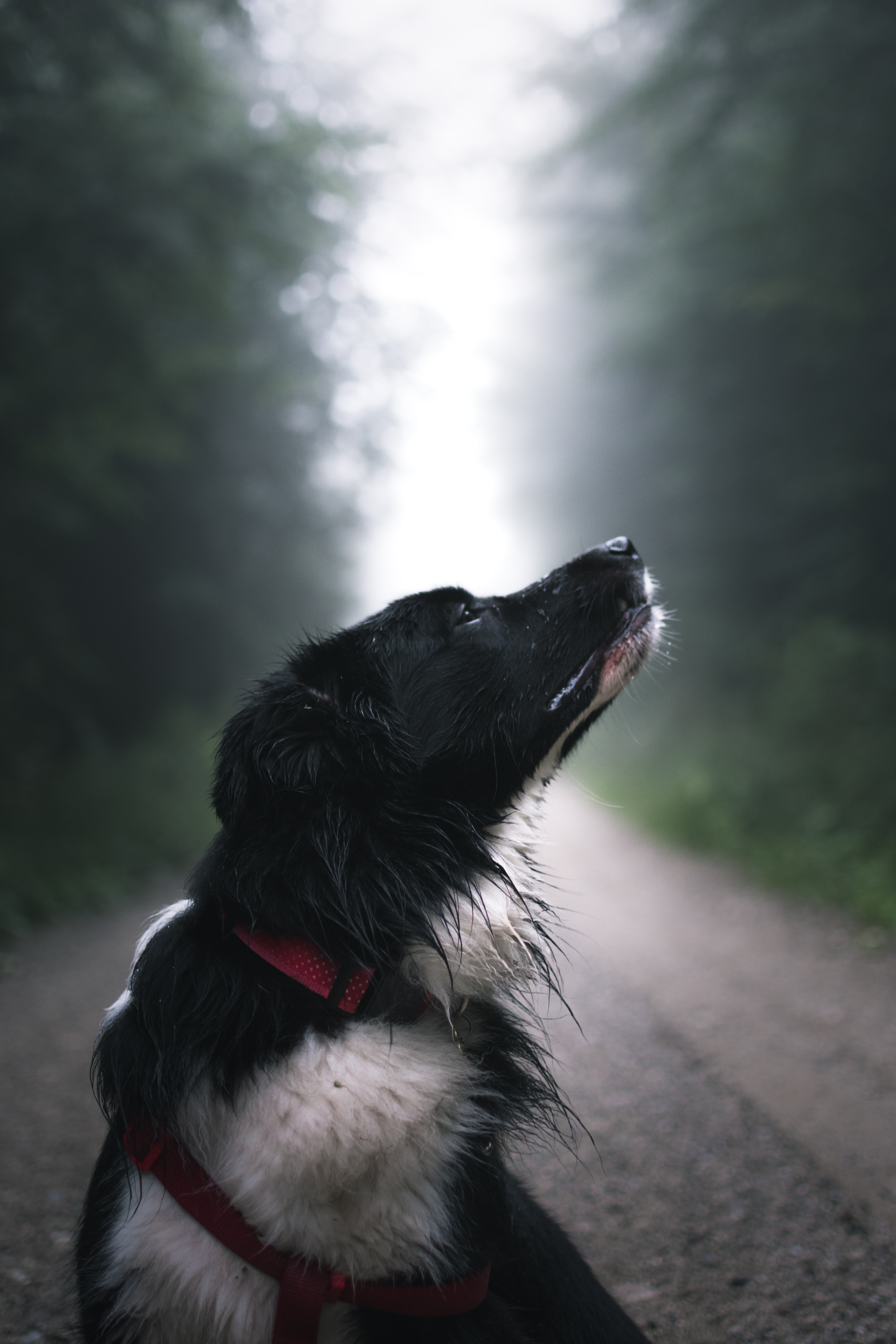 close-up photography of black and white dog on road