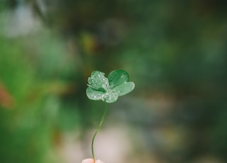 bokeh photography of person holding green leaf