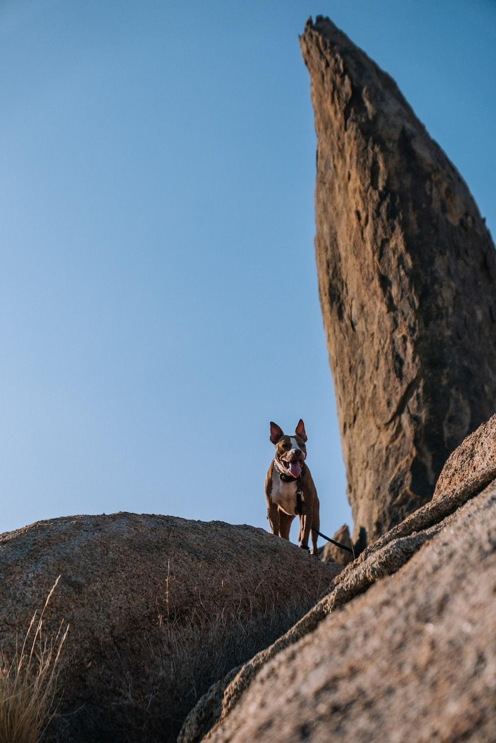 short-coated grey dog standing on rock