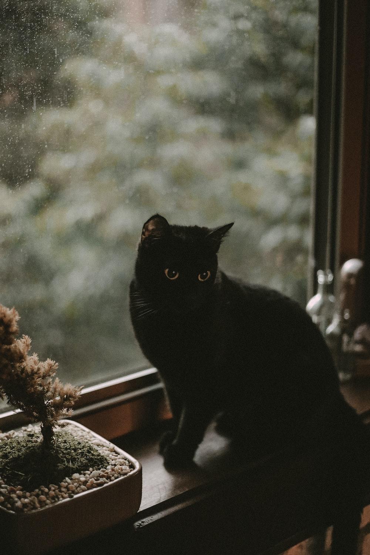 100 Black Cat Pictures Download Free Images On Unsplash