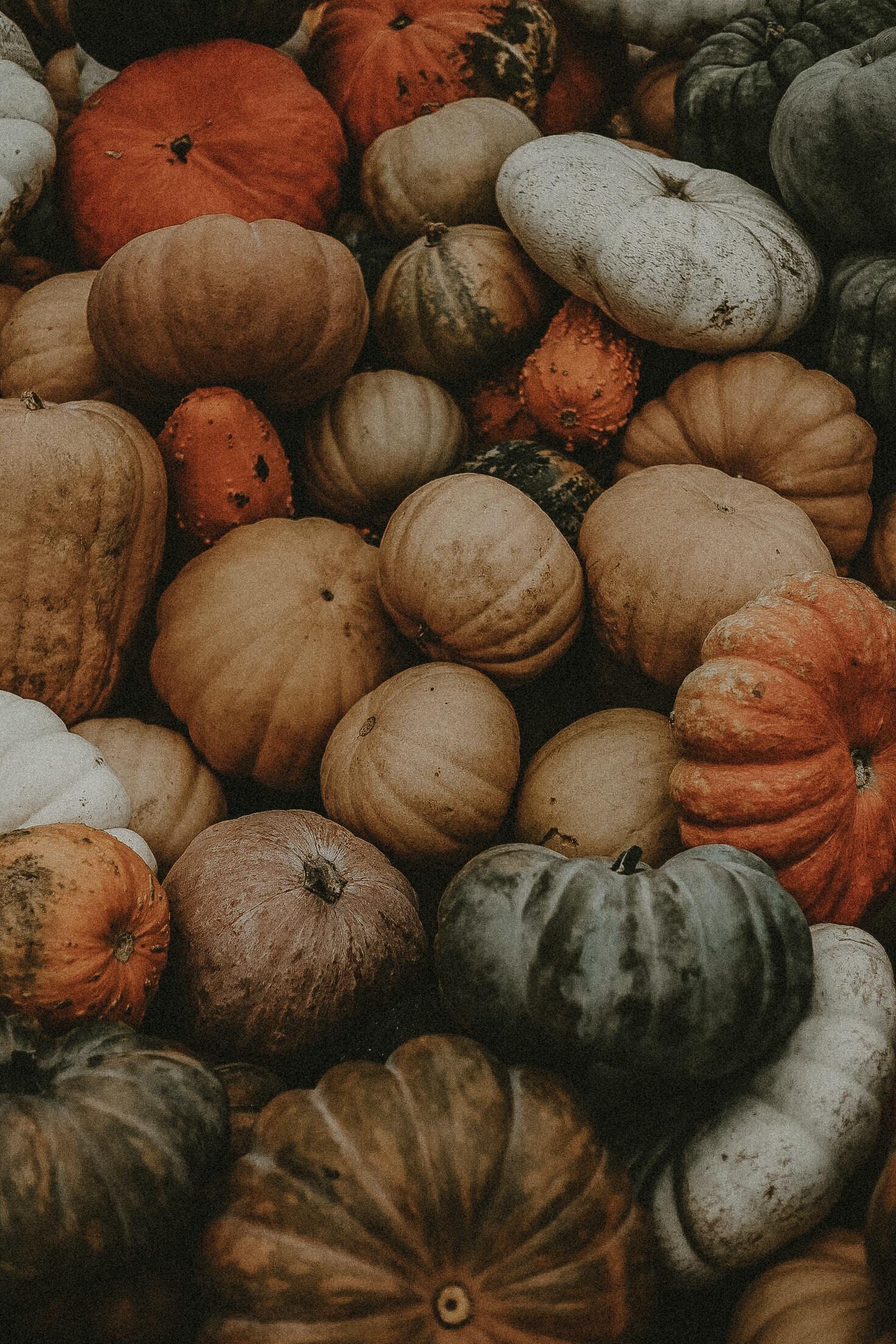 pile of assorted pumpkins