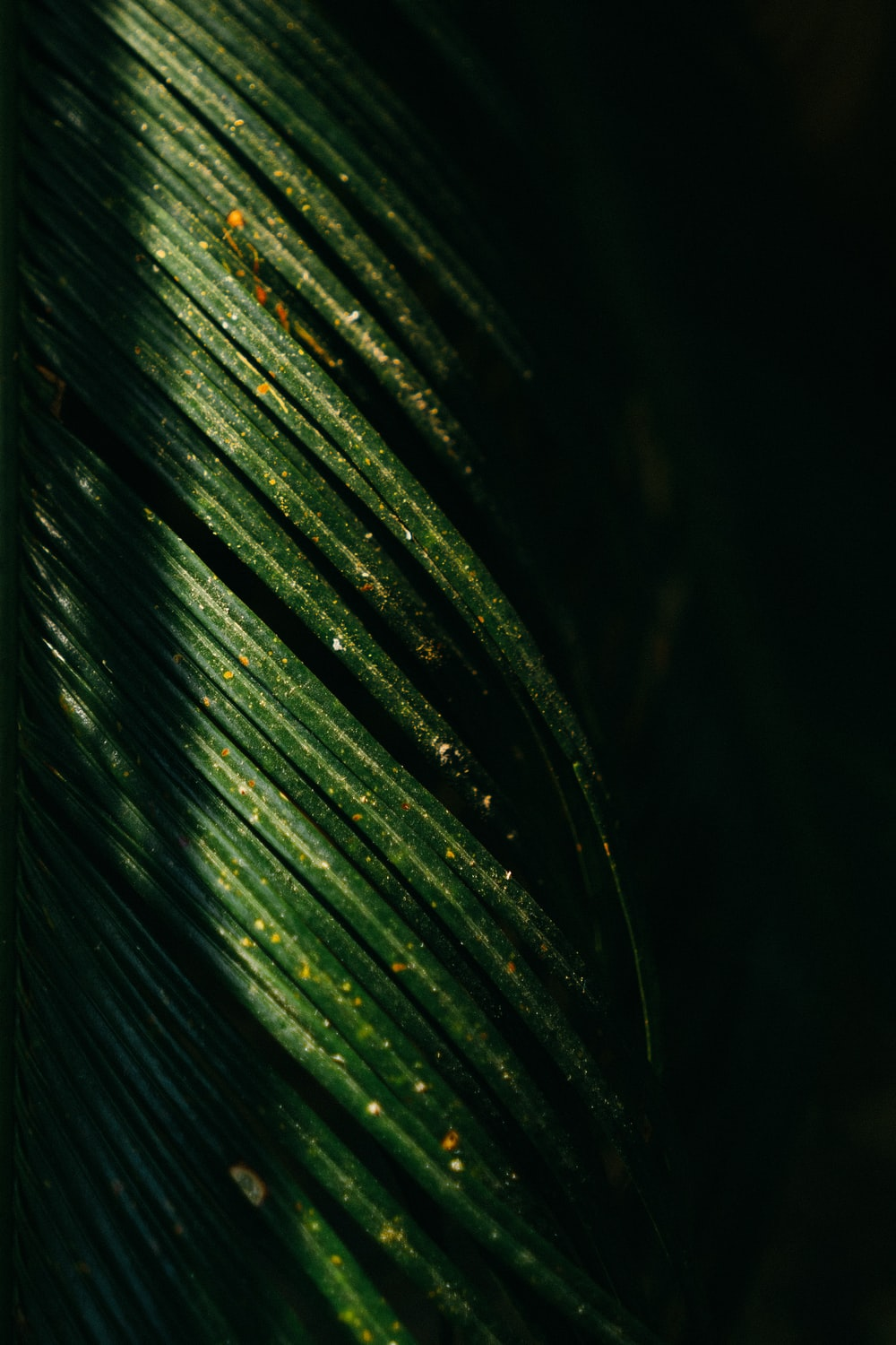 500 Palm Leaf Pictures Hd Download Free Images On Unsplash