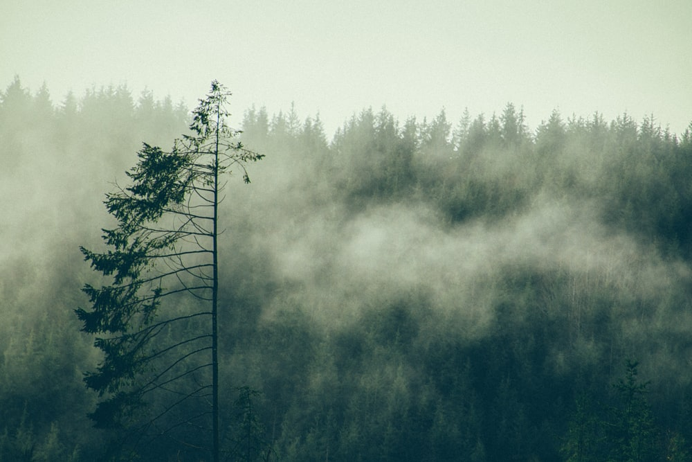 green trees surround by fogs during daytime