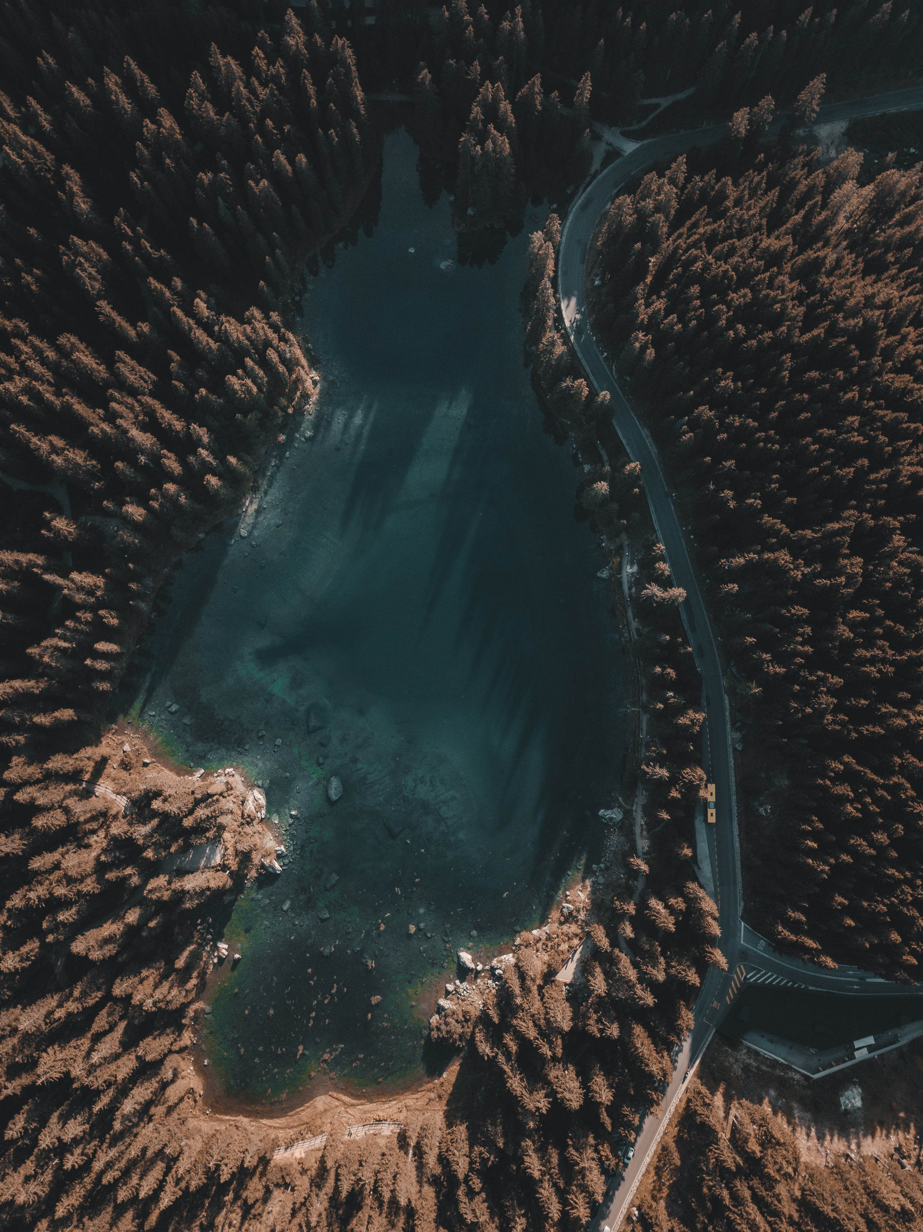 aerial photography of green pine trees near lake