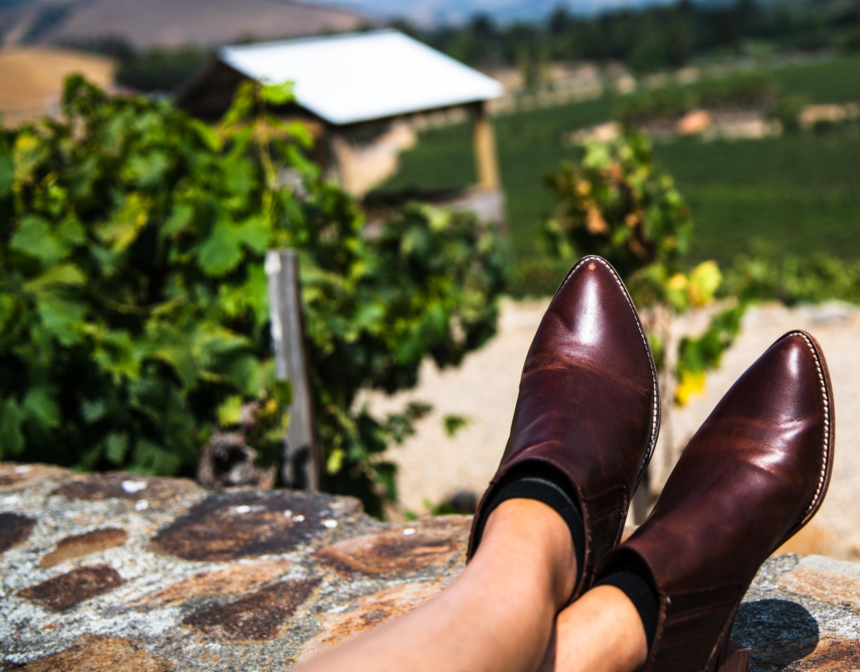 Vineyard in Sonoma, California