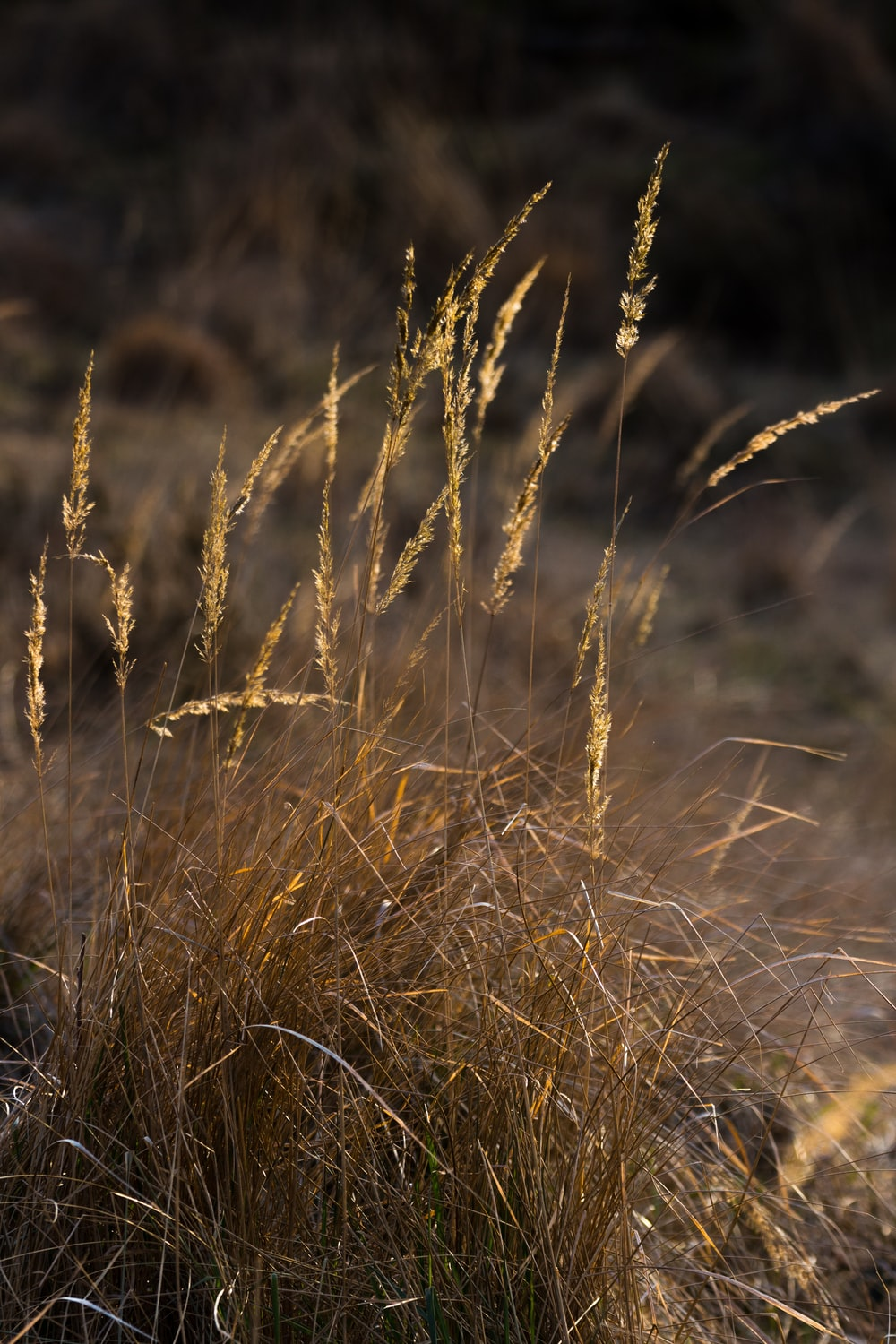 selective focus photography of yellow oats