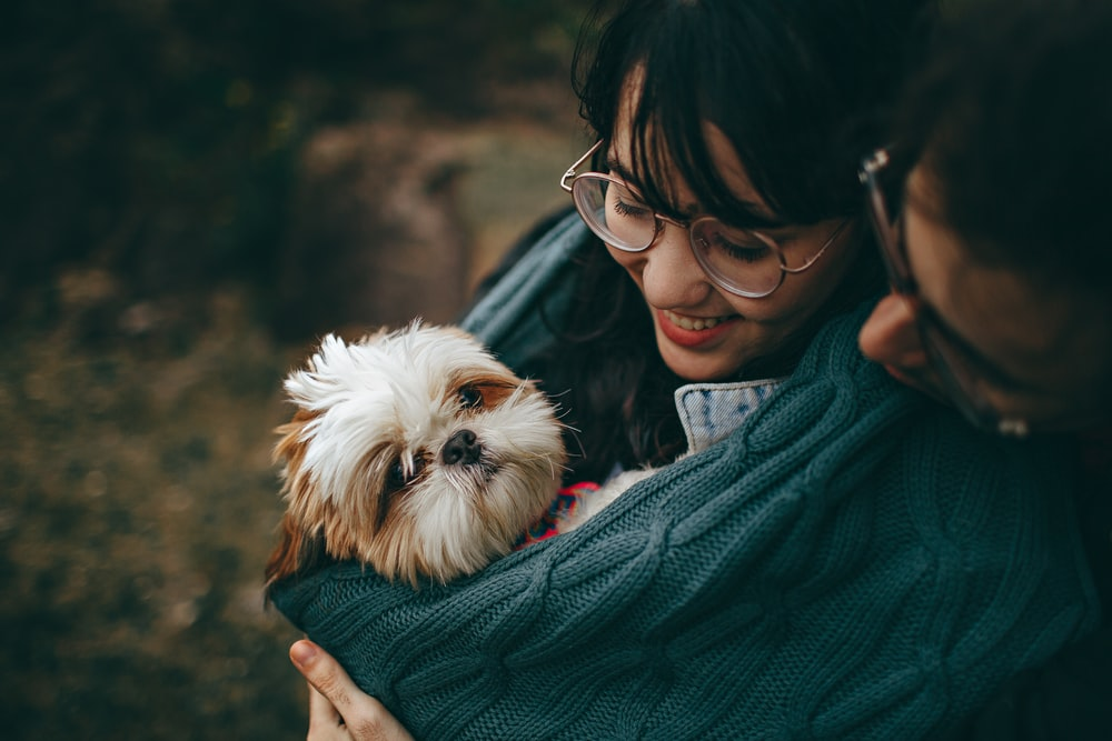 woman and man standing holding white and brown shih tzu