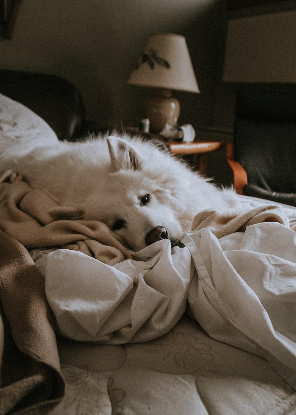 photo of medium white dog lying on white blanket