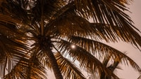 low-angle photography of coconut tree at daytime