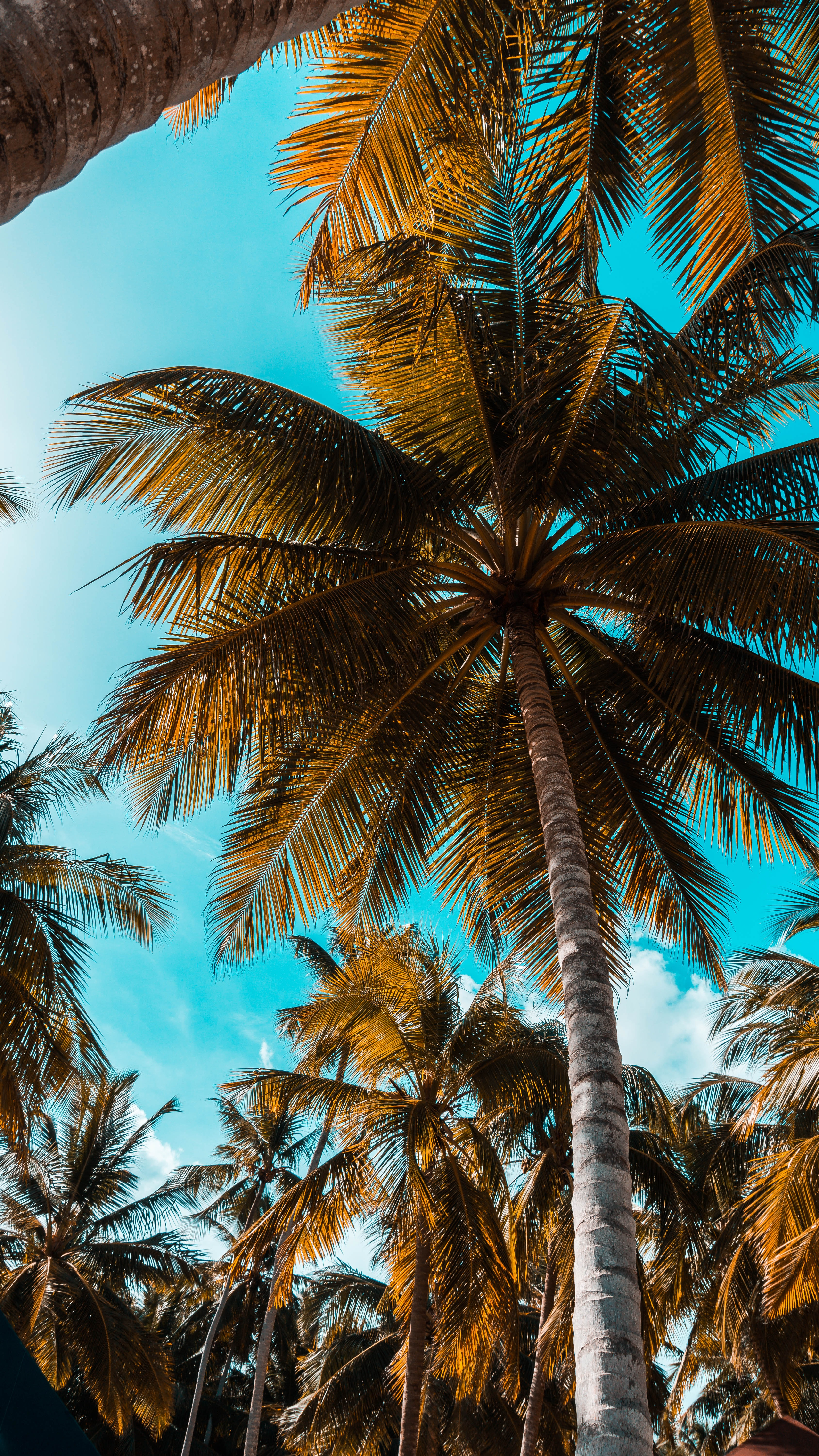 worm's-eye photography of coconut tree
