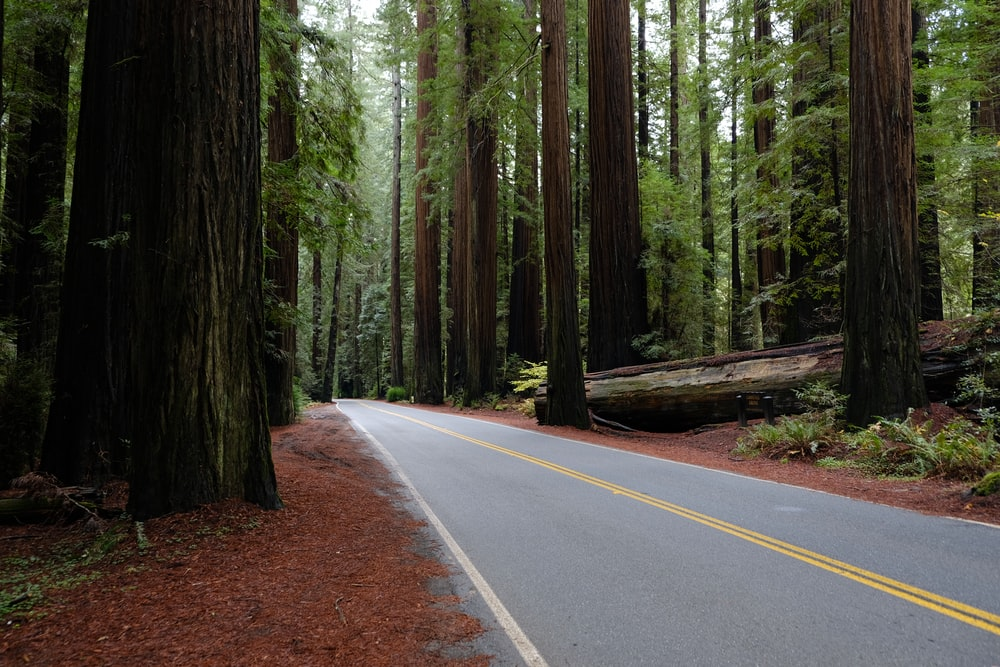 road surrounded by trees and log