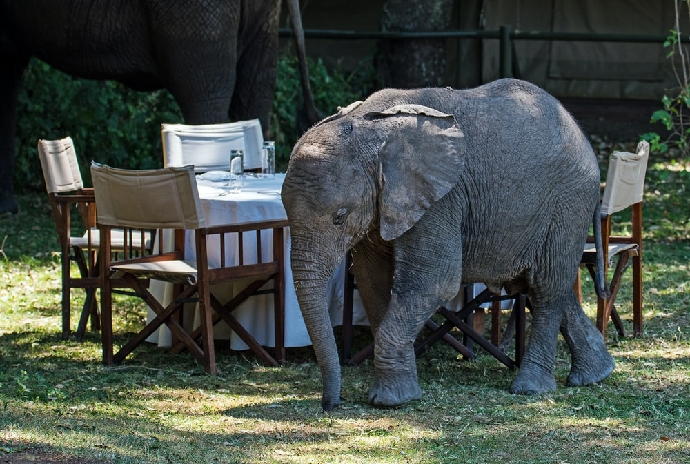 gray elephant beside dining set