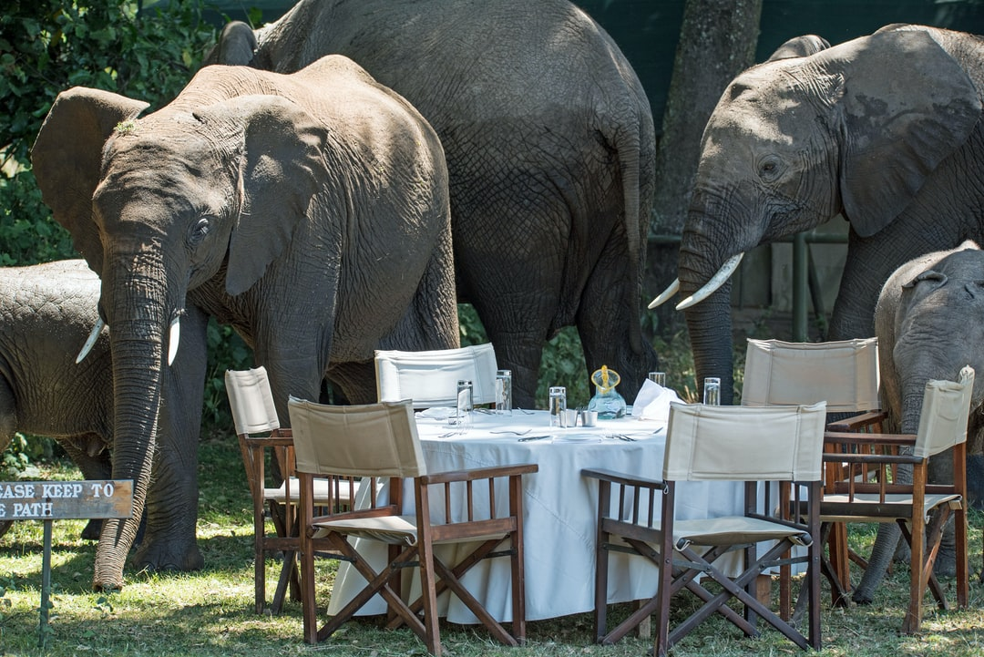 """Elephant takeover: a herd of elephants have taken over the camp, with lunch for the humans postponed. Note the sign """"please keep to the path""""…they didn't, but they didn't knock over anything either! It is amazing that such enormous creatures are not at all clumsy, and walk more quietly than people."""