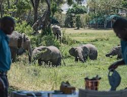 Sansibar - Selous Nationalpark
