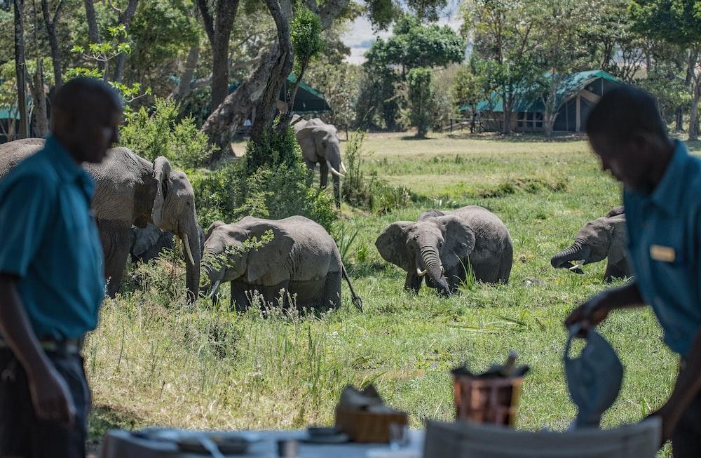 two men near grey elephants