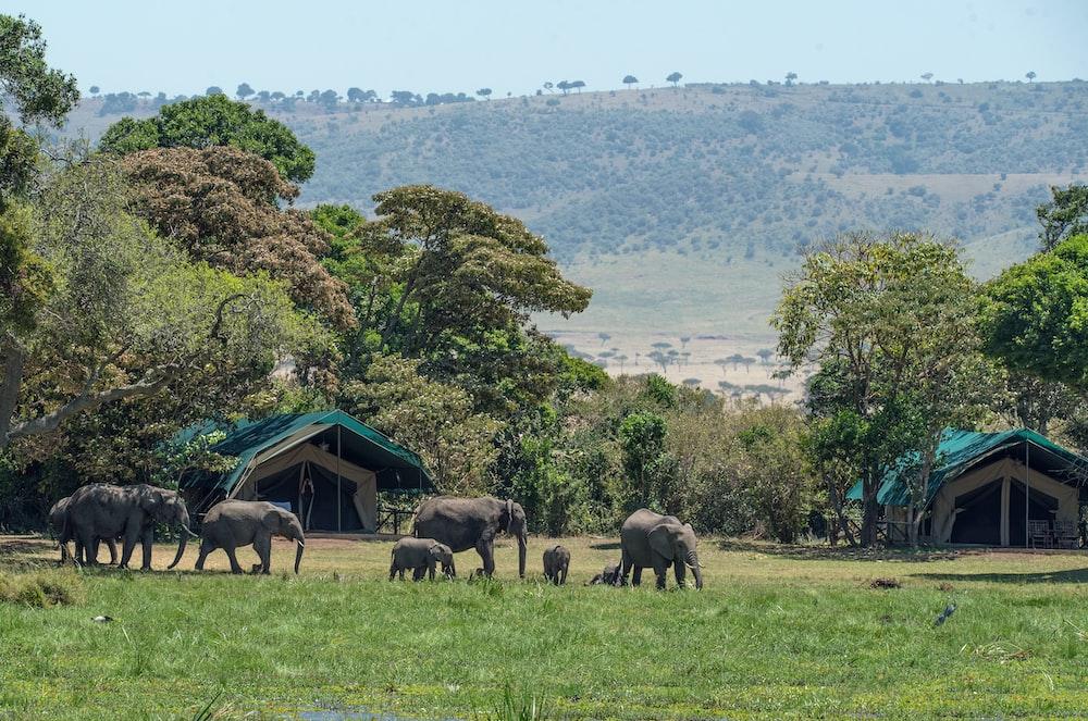 elephants near trees