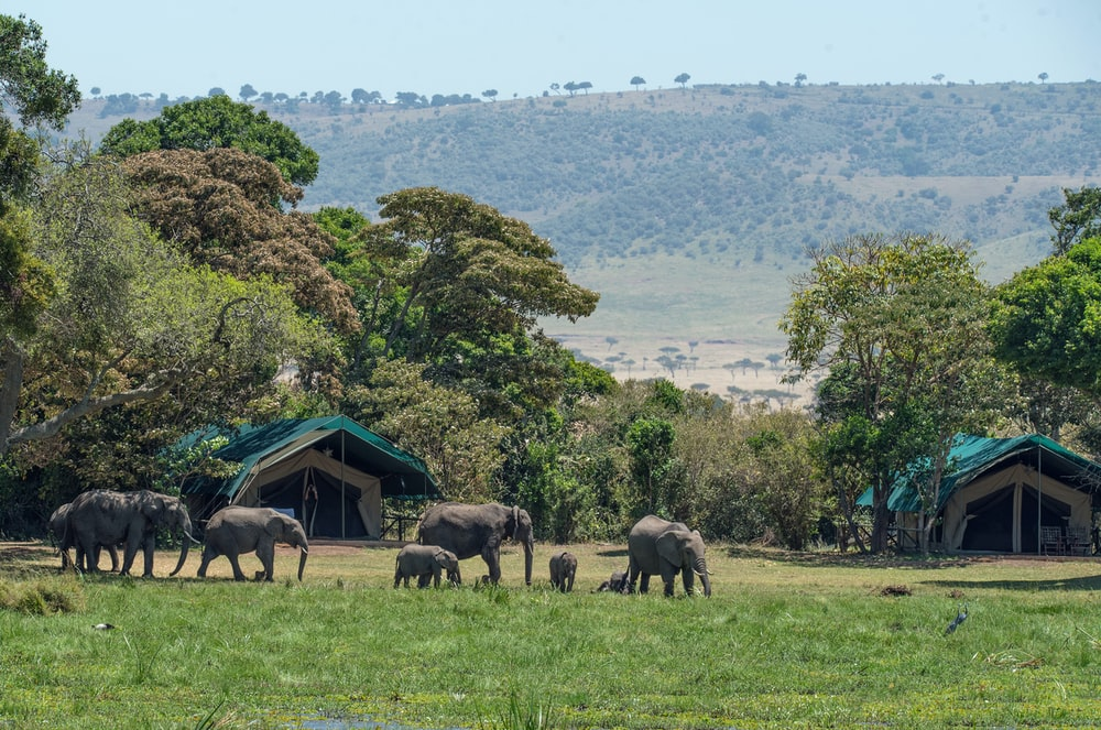 Stop Wasting Time And Start Camp Okavango