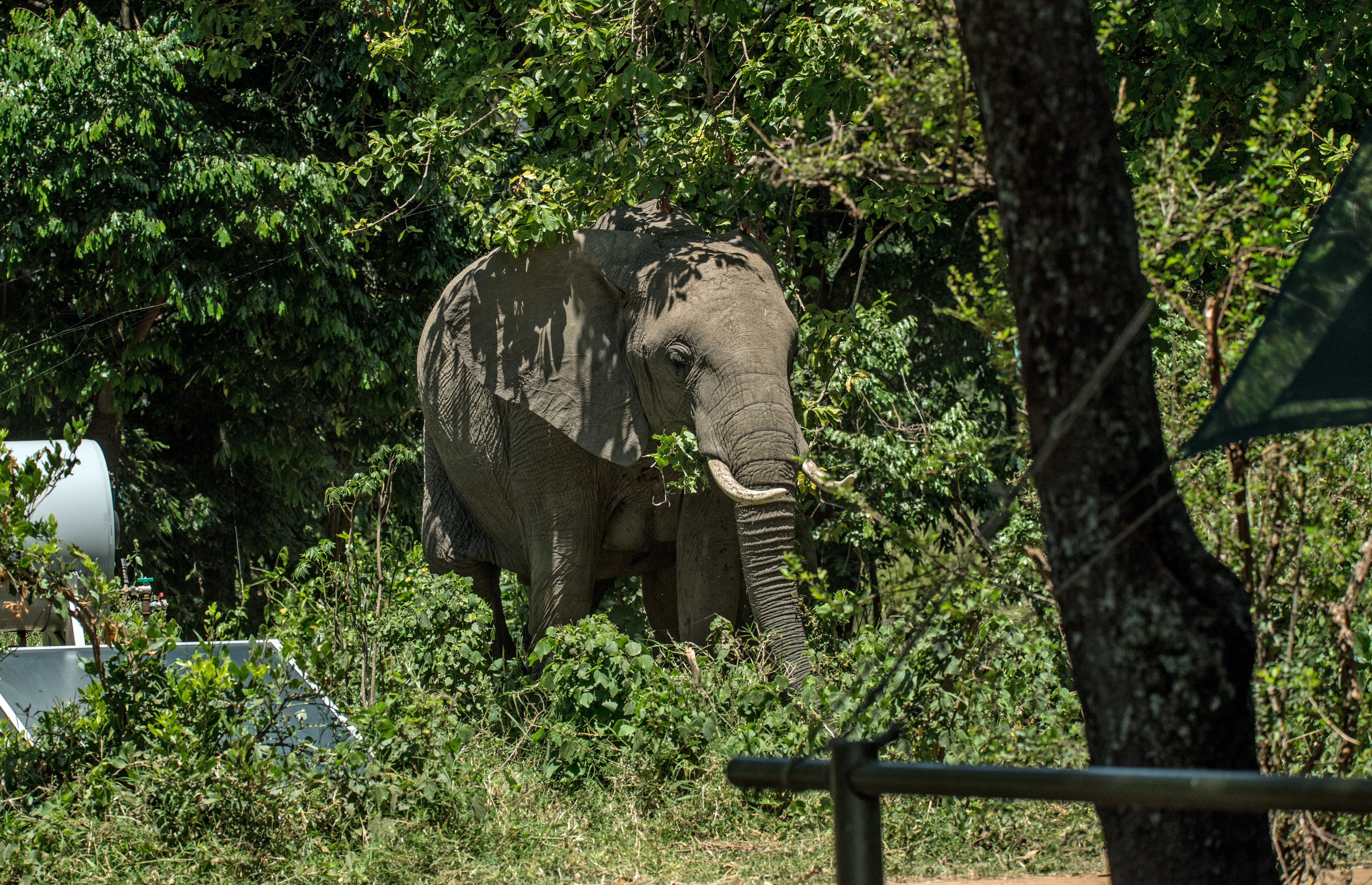 elephant standing near tree and gray tank during daytime
