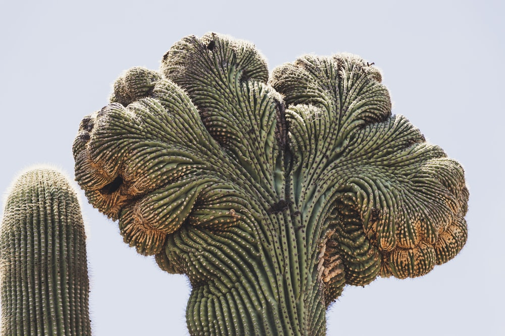 green and brown cactus
