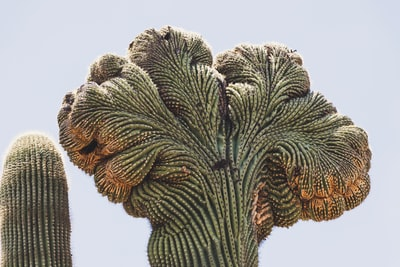 green and brown cactus cactu teams background