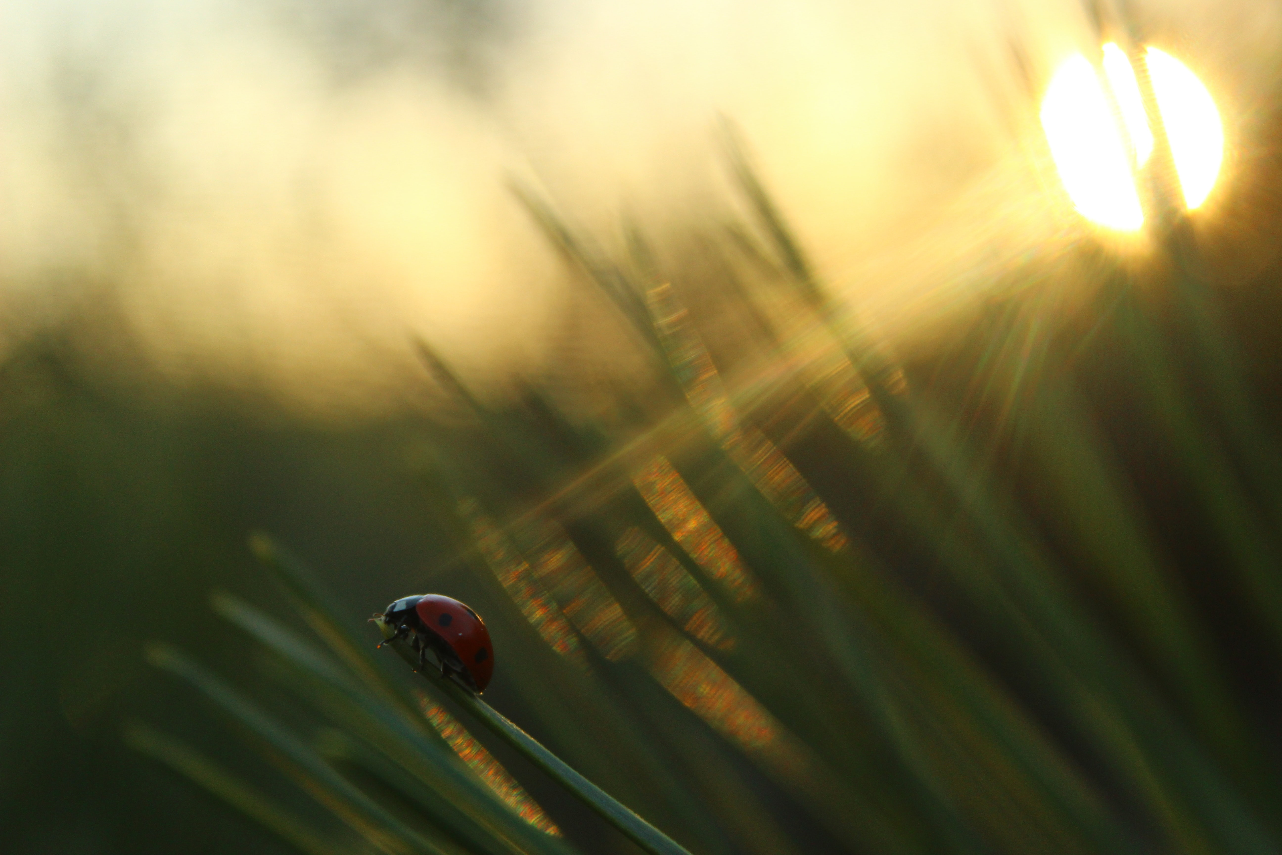 selective focus photography of ladybug on green grass during golden hour