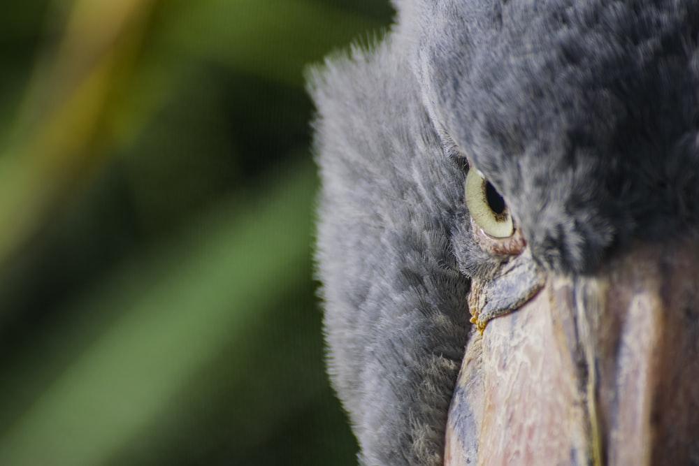 closeup photography of gray bird