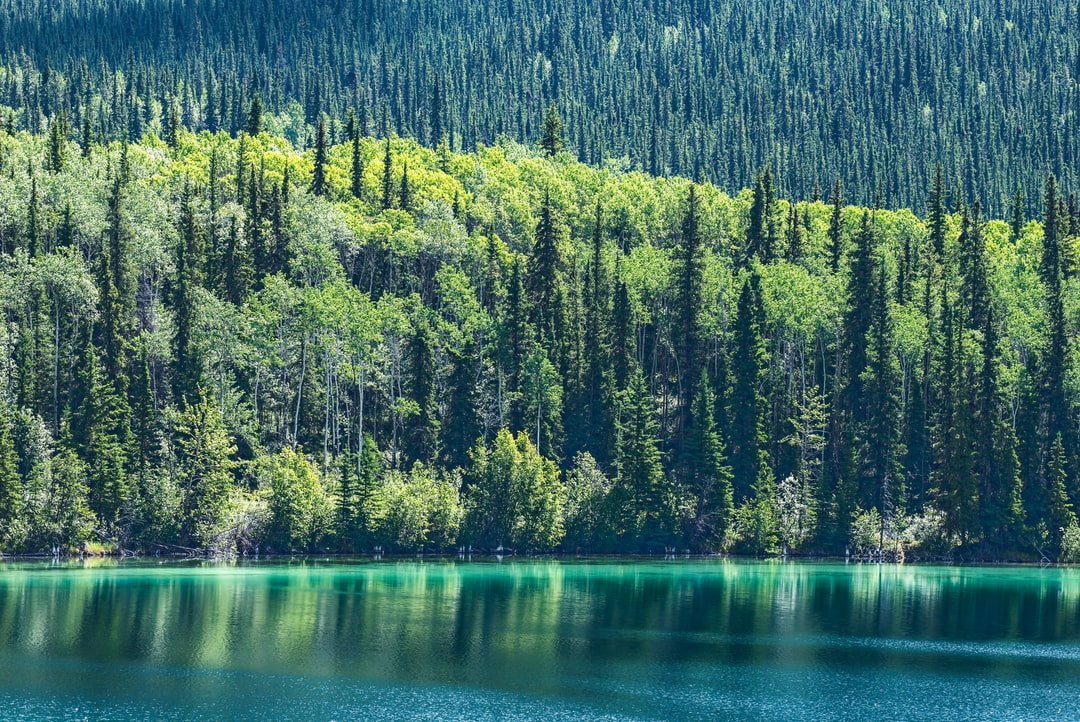 This photo was taken on a roqd trip from Vancouver Island, British Columbia to Yukon Territory (Canada). In common with many lakes in mountainous BC, there is glacial flour in the inlet rivers. This creates beautiful green, blue, and aqua colours in the lakes. In the background is the boreal forest dominated by spruce and poplar trees.