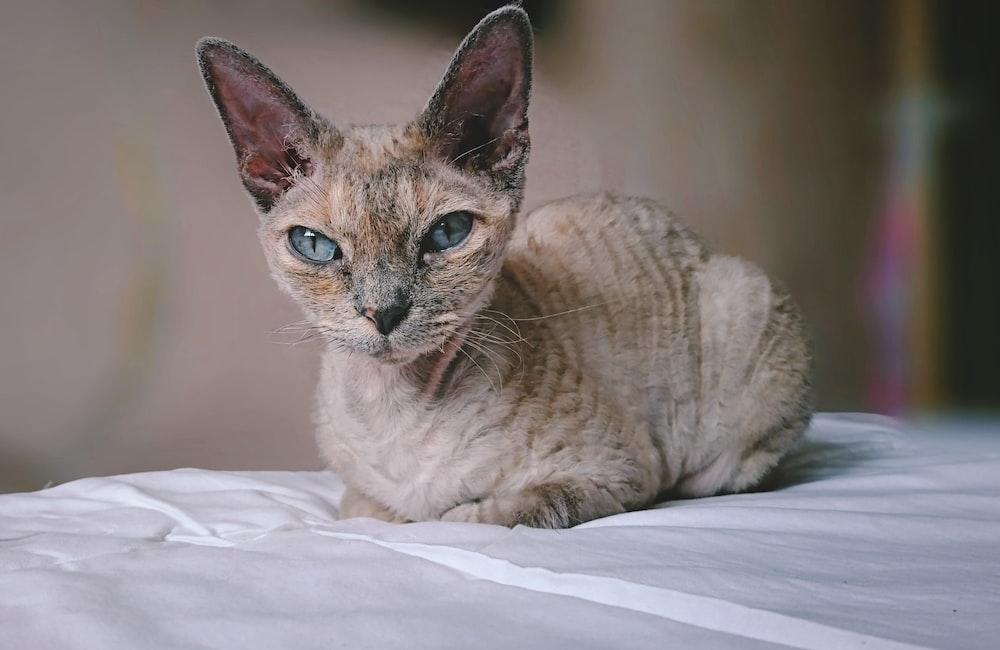 beige cat lying on white textile
