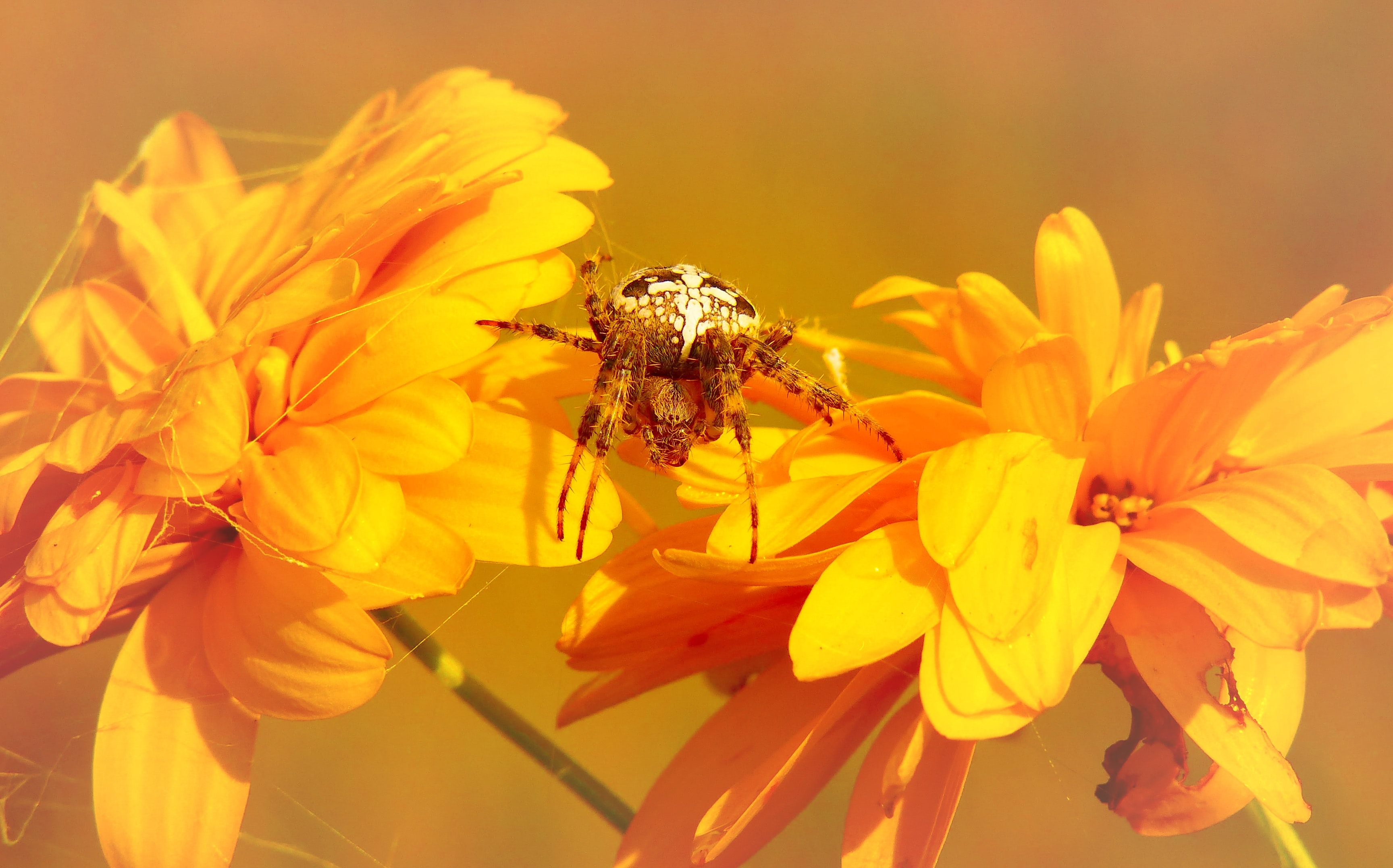 macro photography of yellow spider