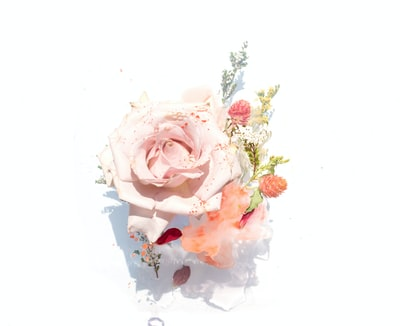pink roses illustration floral zoom background