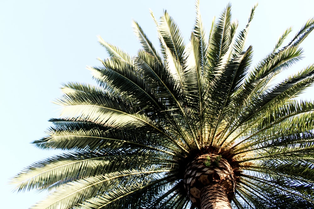 green leafed palm plant