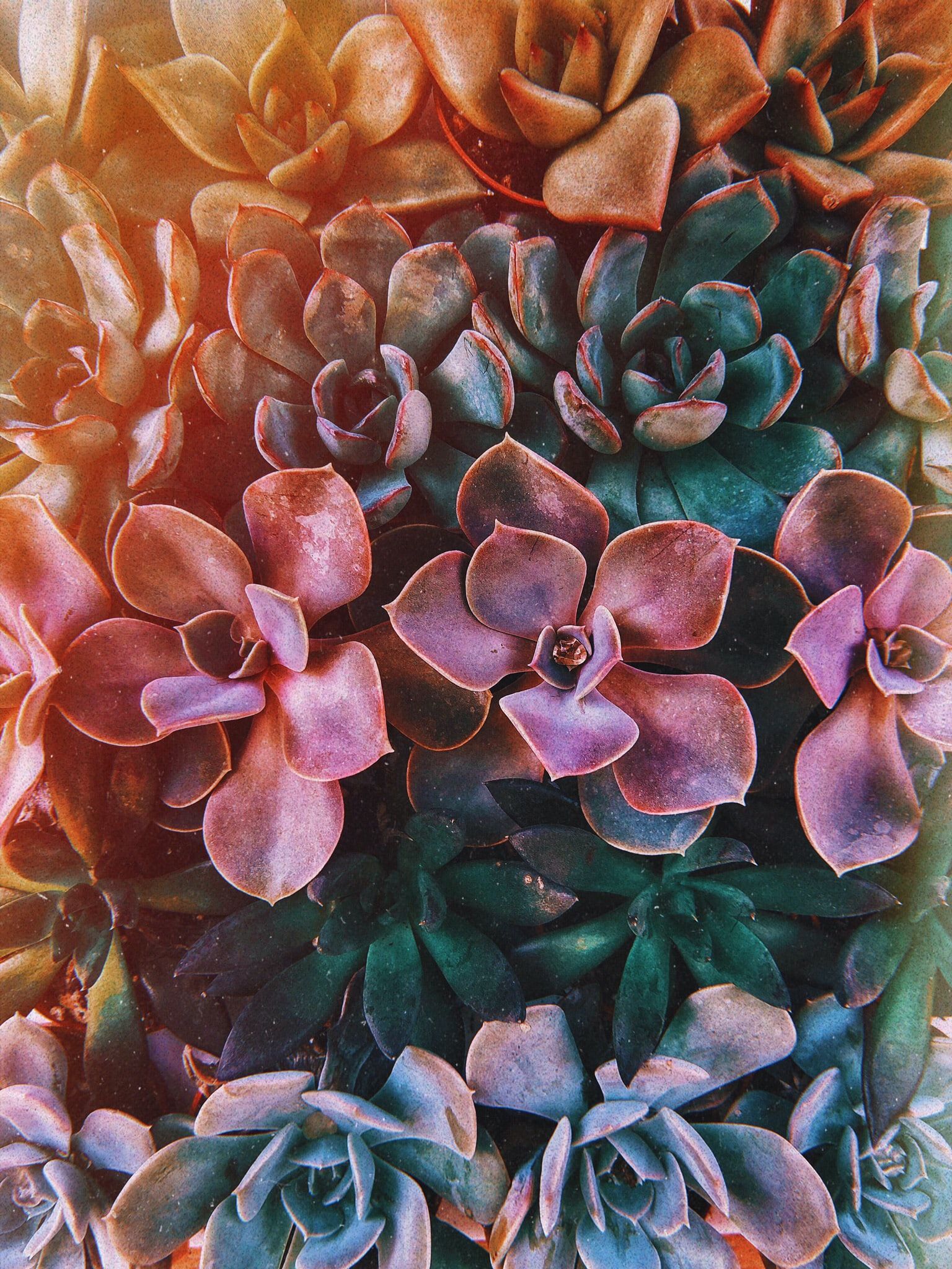 Image result for succulent aesthetic wallpaper