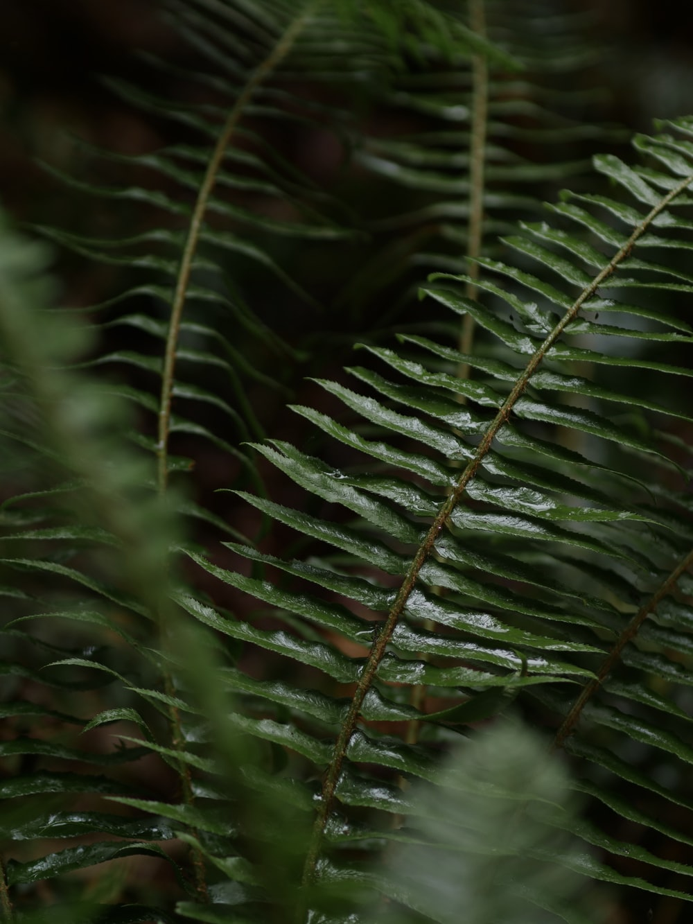 shallow focus photography of fern plant