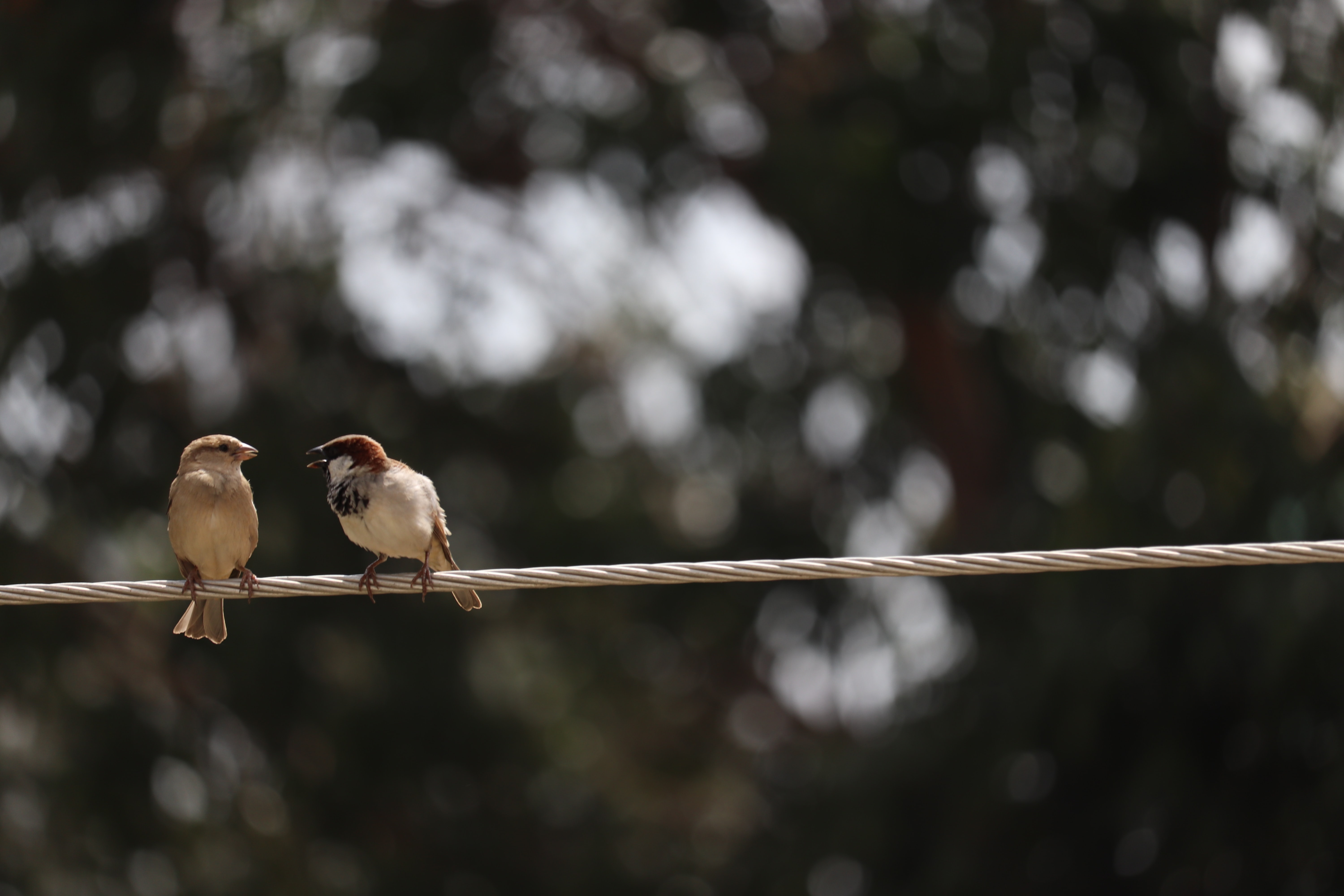 tilt shift focus photography of two brown birds perched on rope