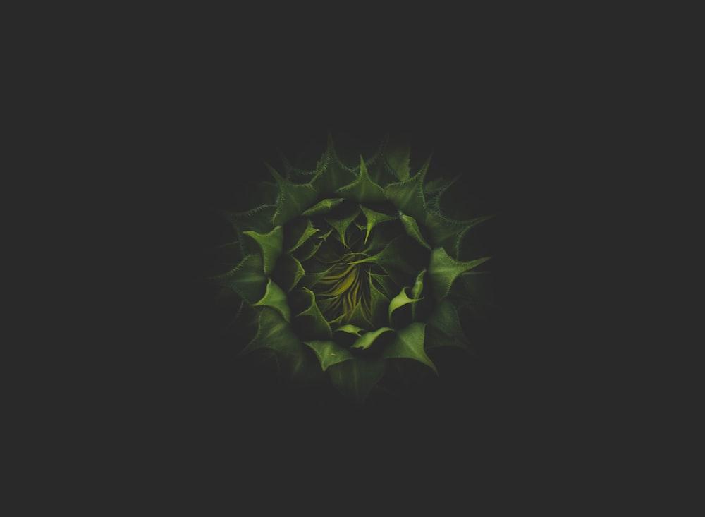 green plant in dark background