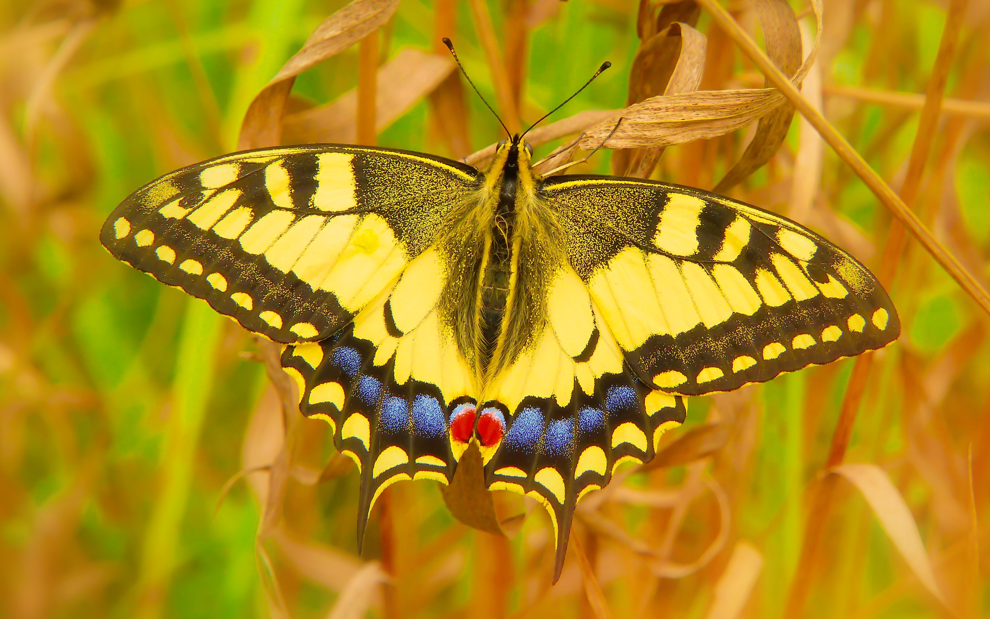 close-up photo of yellow and black moth on brown leaf