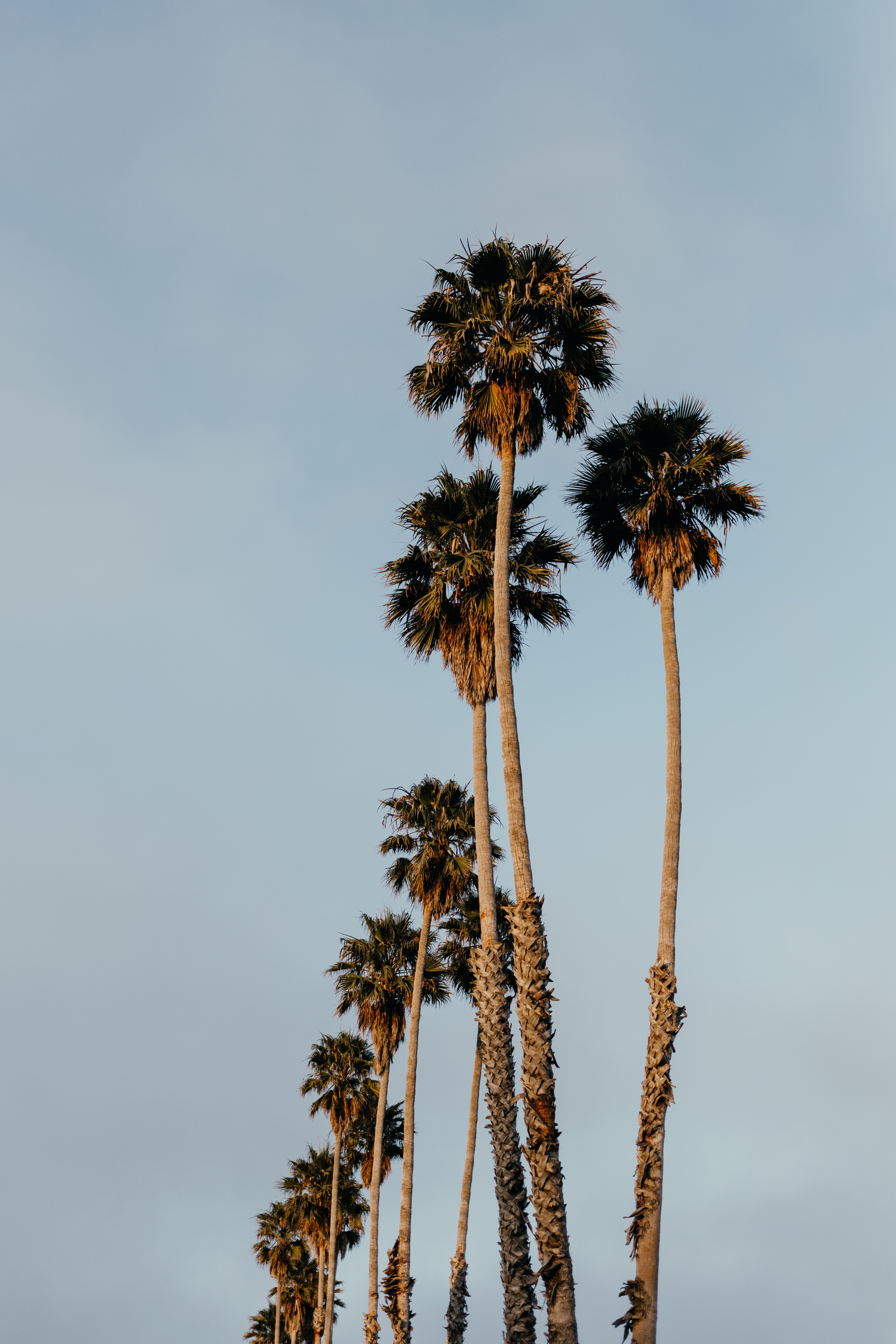 green palm trees
