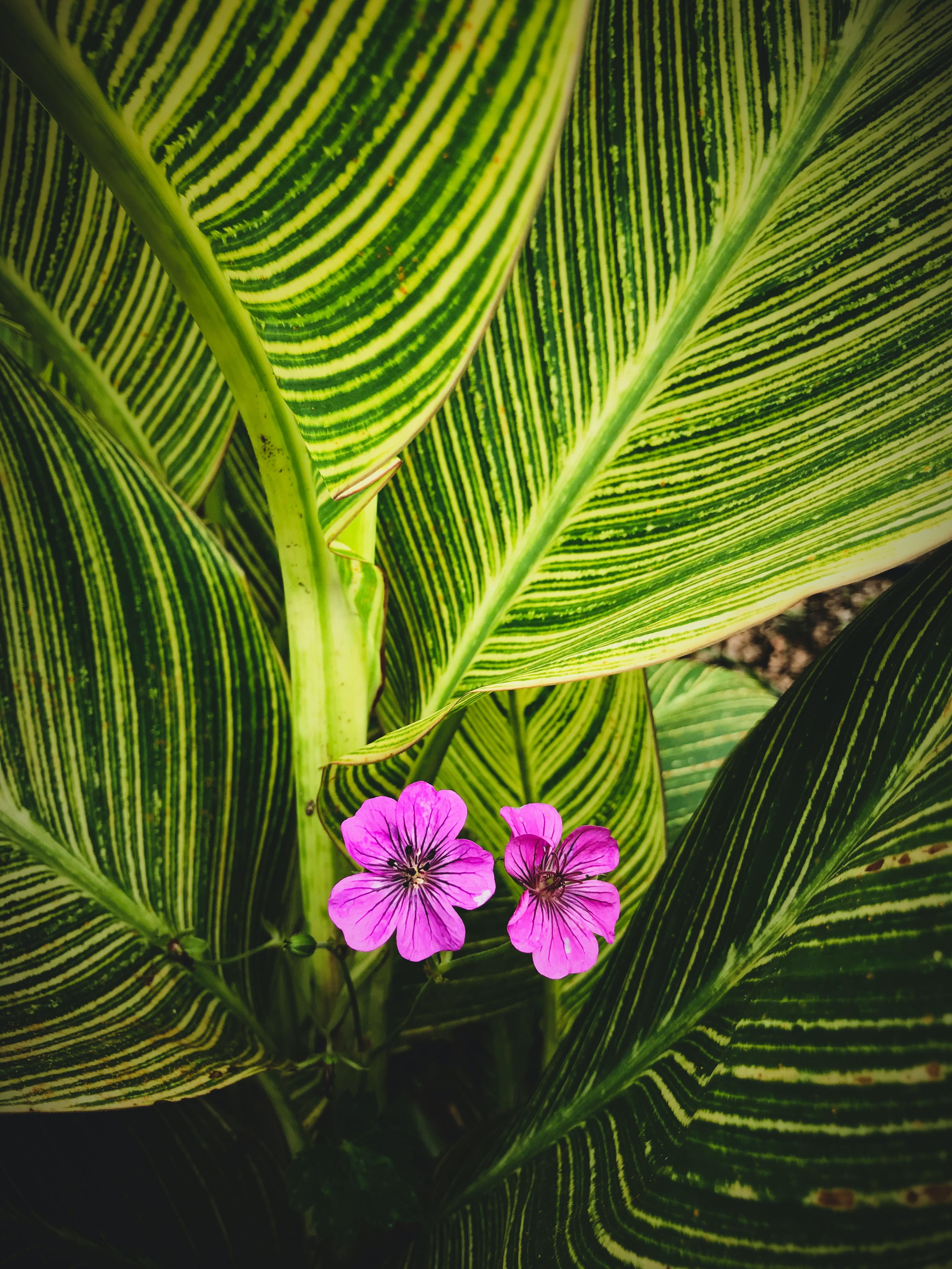 two purple petaled flowers