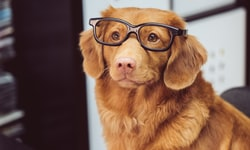 4 Mental Health Benefits Of Music For Humans & Dogs
