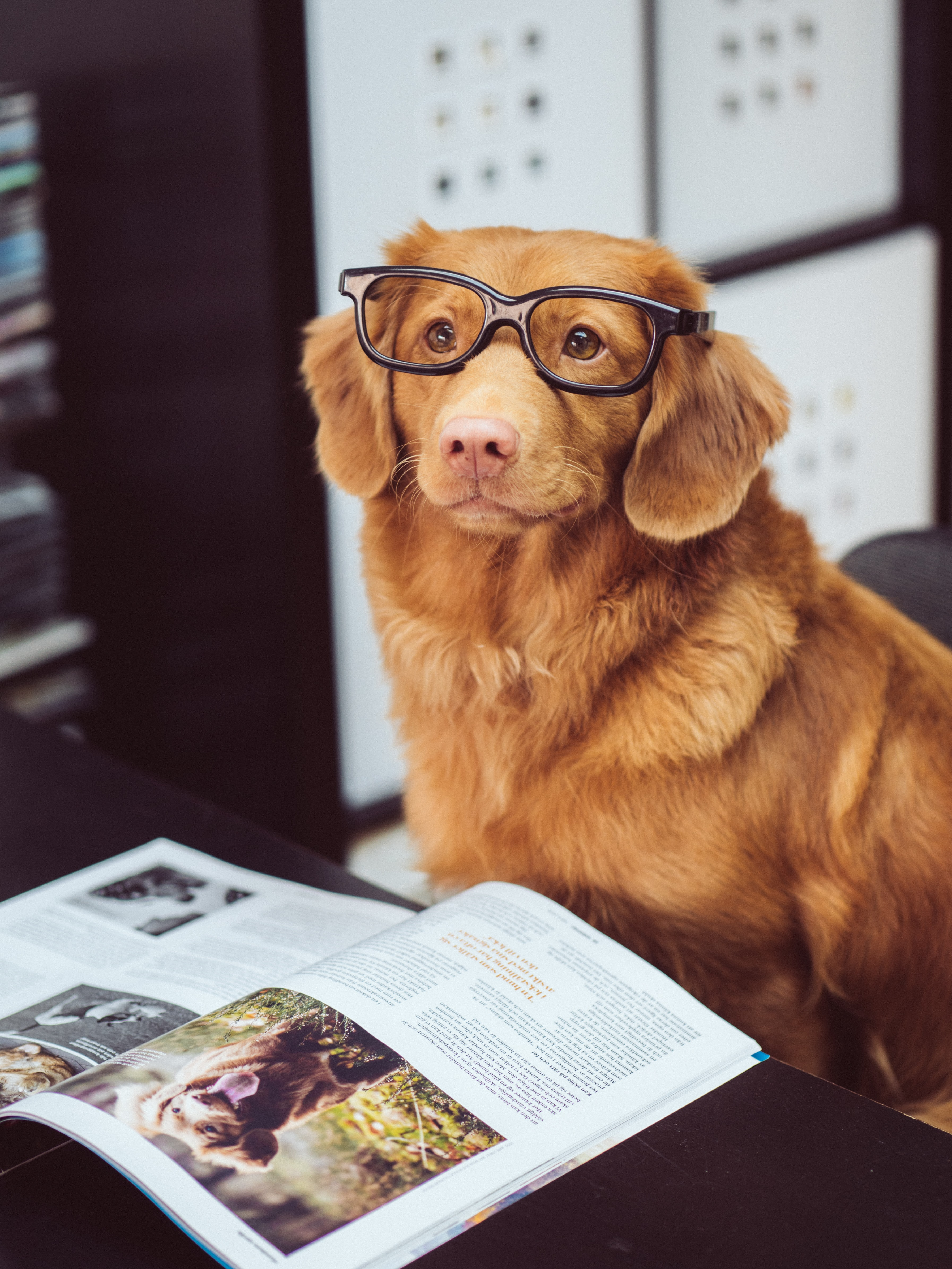 dog sitting in front of book