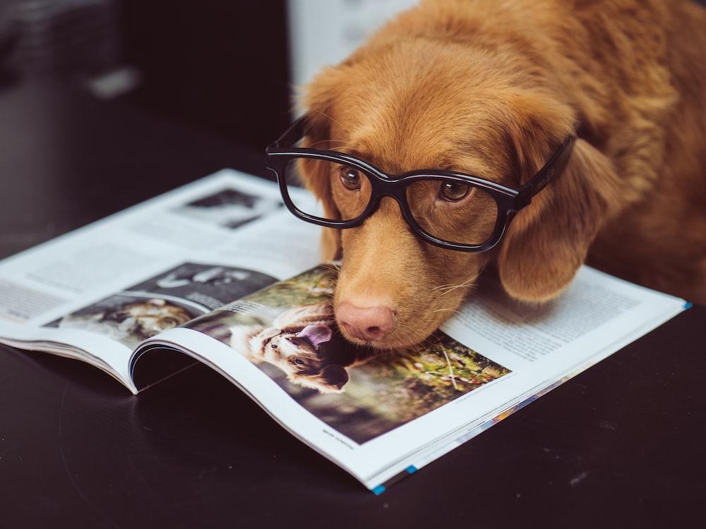 black framed eyeglasses