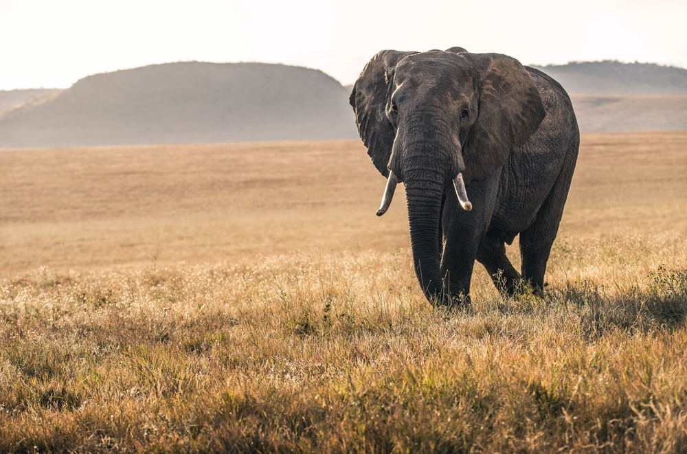 elephant on grass during daytime