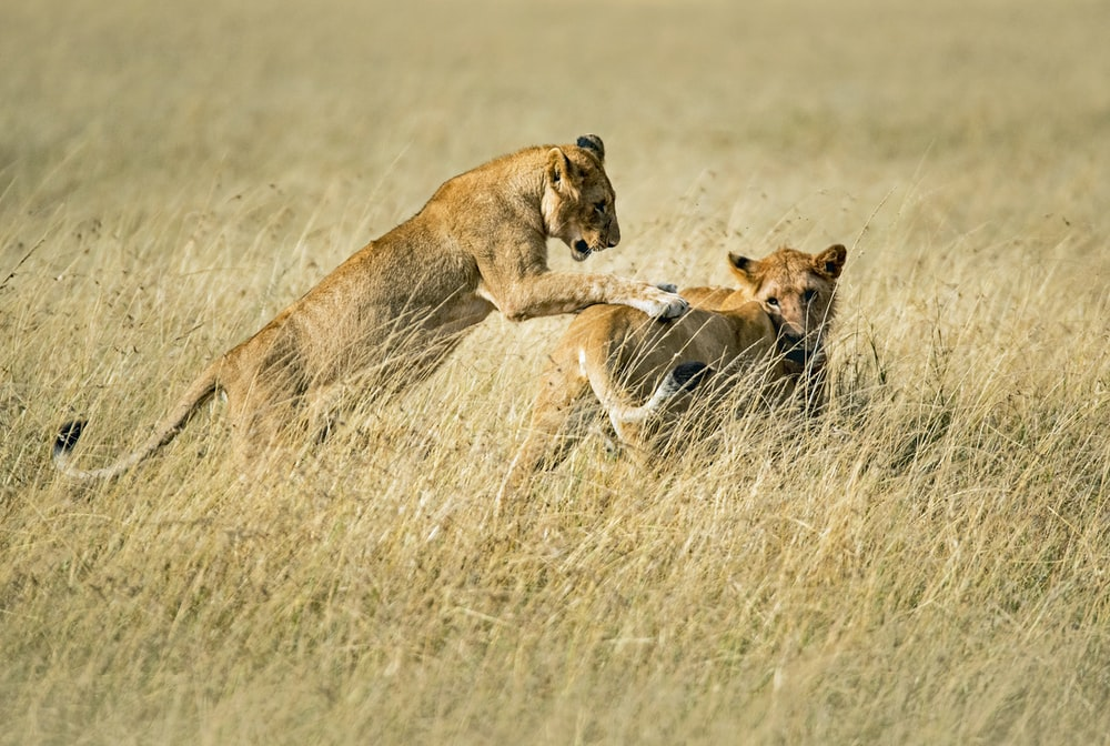 Masai Mara Pictures Download Free Images On Unsplash
