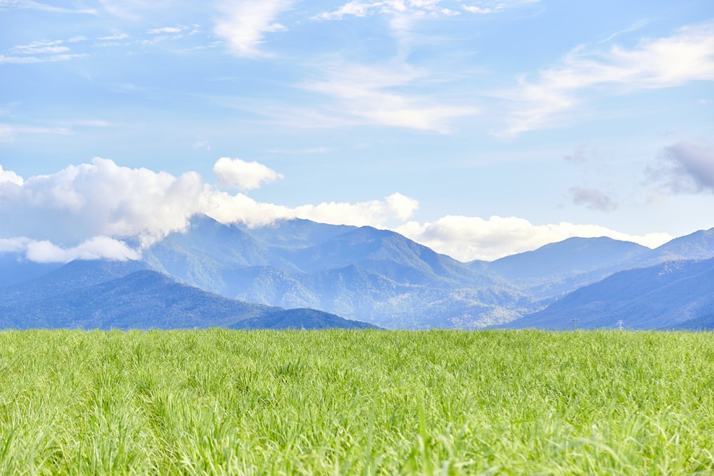 green grass field and mountain at distance