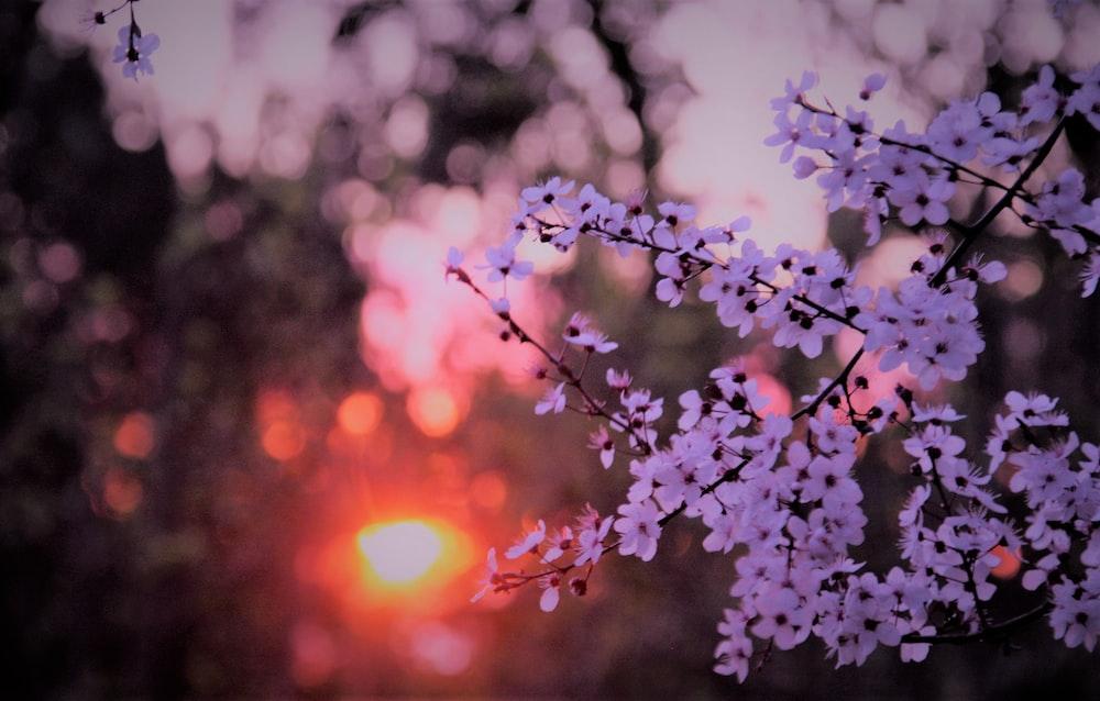 purple petaled flowers during sunset